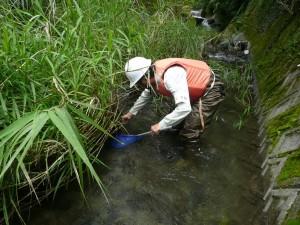 1_2-1水生生物調査